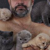 Картинки котов: Невероятная популярность или Пушистая чума XXI века