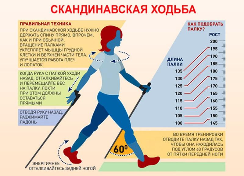 подобрать палку скандинасвкая ходьба