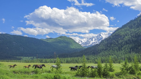 Алтайские горы (Россия, Алтайский край)