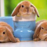 Декоративные кролики: лучшие фото