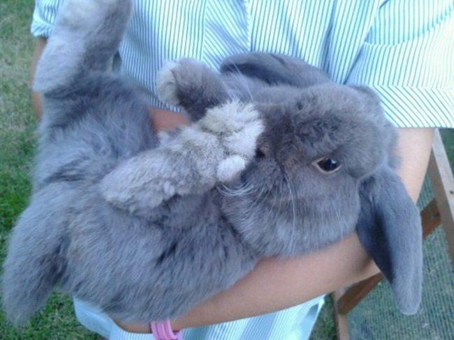 фото декоративных кроликов разных
