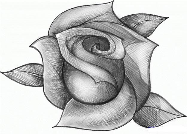картинка розы карандашом