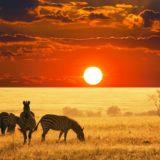 Африканское сафари: фото и описание
