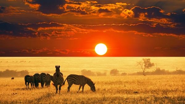 картинки Африка сафари