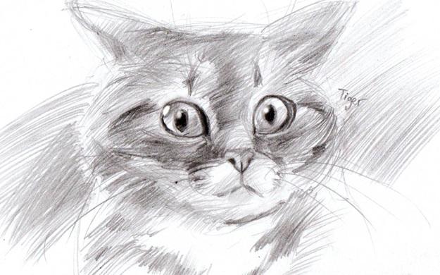 кот с большими глазами картинка