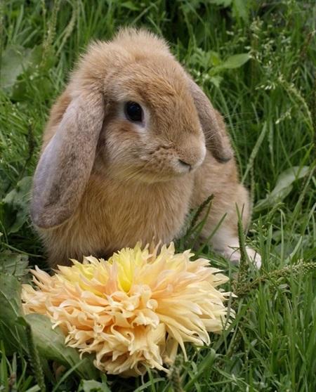 кролики породы с фото