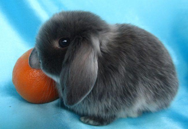 маленький кролик фотография