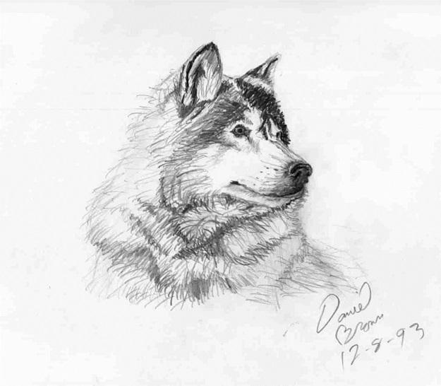 волк карандашом