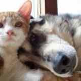 Кто умнее — кошки или собаки