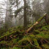 Почему нельзя убирать упавшие деревья