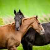 Почему русские не едят лошадей